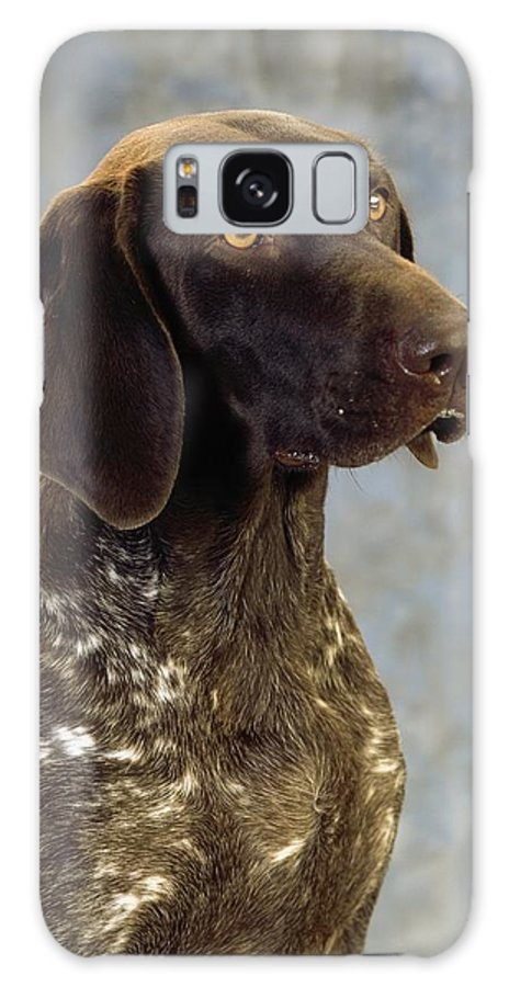 Color Galaxy S8 Case featuring the photograph German Pointer Portrait Of A Dog by The Irish Image Collection