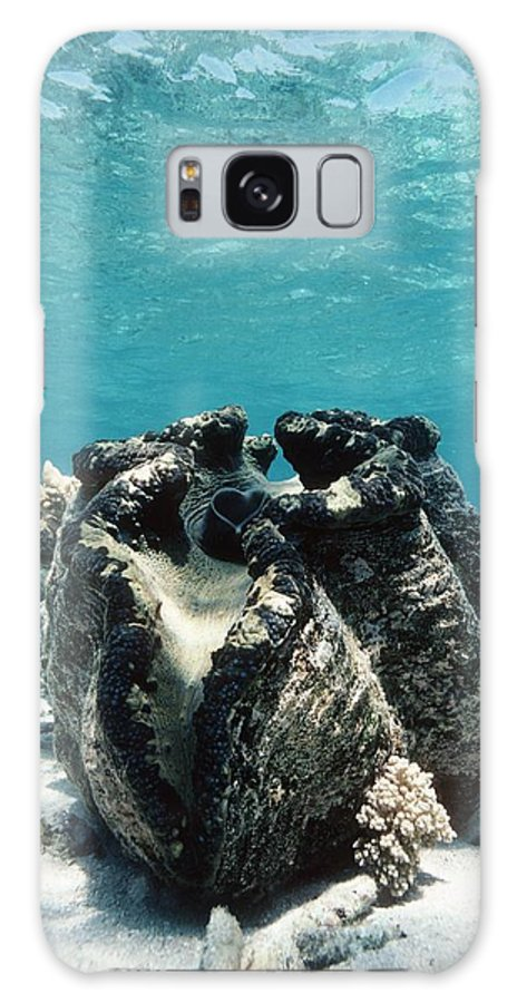 Giant Giant Clam Galaxy S8 Case featuring the photograph Giant Giant Clam by Georgette Douwma