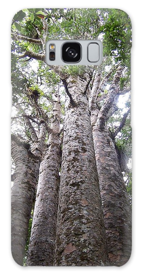 New Zealand Galaxy S8 Case featuring the photograph Giant Kauri Grove by Peter Mooyman