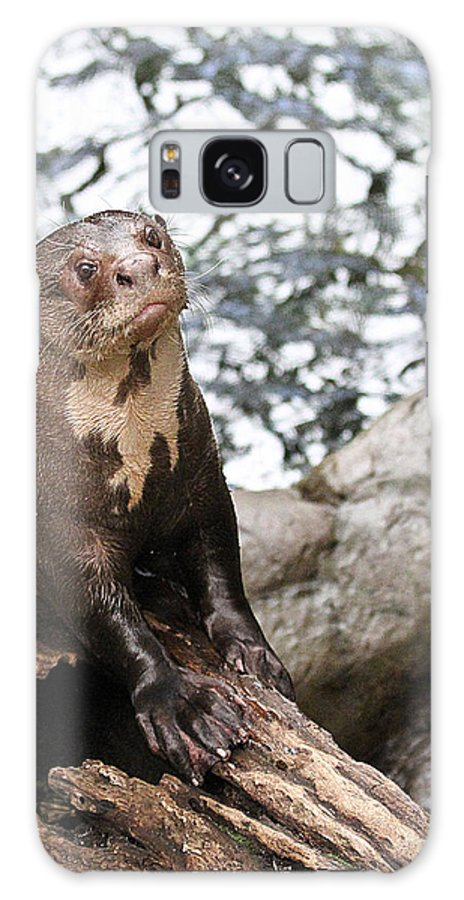 Otter Galaxy S8 Case featuring the photograph Giant River Otter by Elizabeth Hart