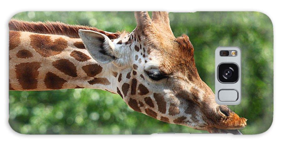Africa Galaxy S8 Case featuring the photograph Giraffe's Tongue by Tilen Hrovatic