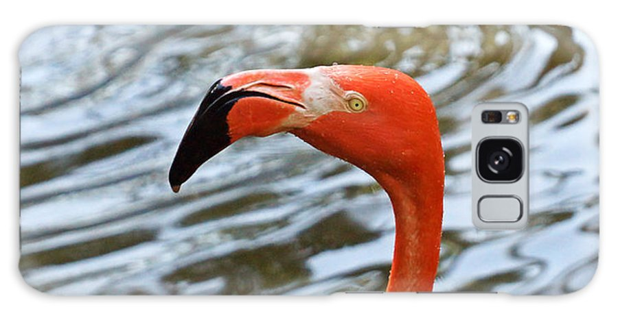Flamingo Galaxy S8 Case featuring the photograph Giving You A Heads Up by Carmen Del Valle