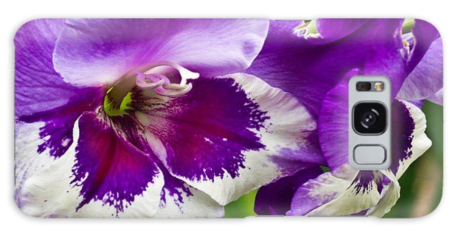 Gladiolus Galaxy S8 Case featuring the photograph Gladiola Blossom 2 by Douglas Barnett
