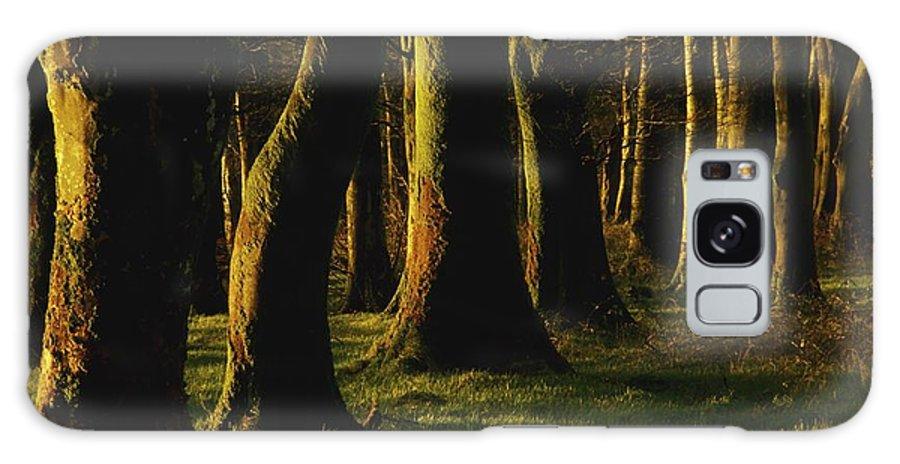 Cork Galaxy S8 Case featuring the photograph Glenville Woods, County Cork, Ireland by Richard Cummins