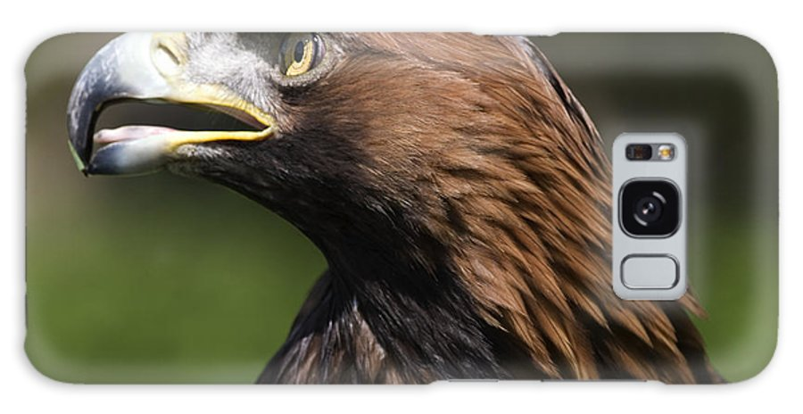 Golden Eagle Galaxy S8 Case featuring the photograph Golden Eagle by Denise Swanson