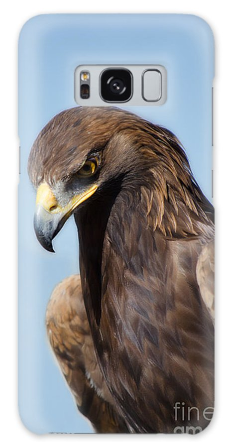 Eagle Galaxy S8 Case featuring the photograph Golden Eagle by Donna Greene
