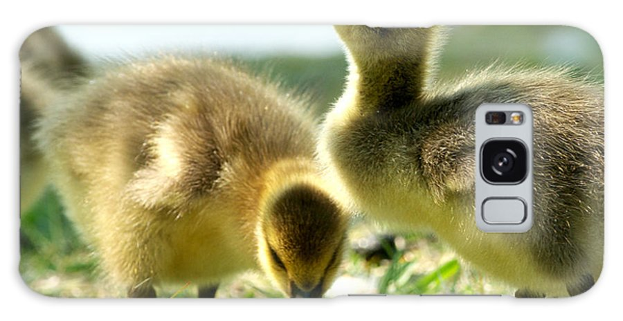 Canada Geese Galaxy S8 Case featuring the photograph Goslings 6 by Sharon Talson
