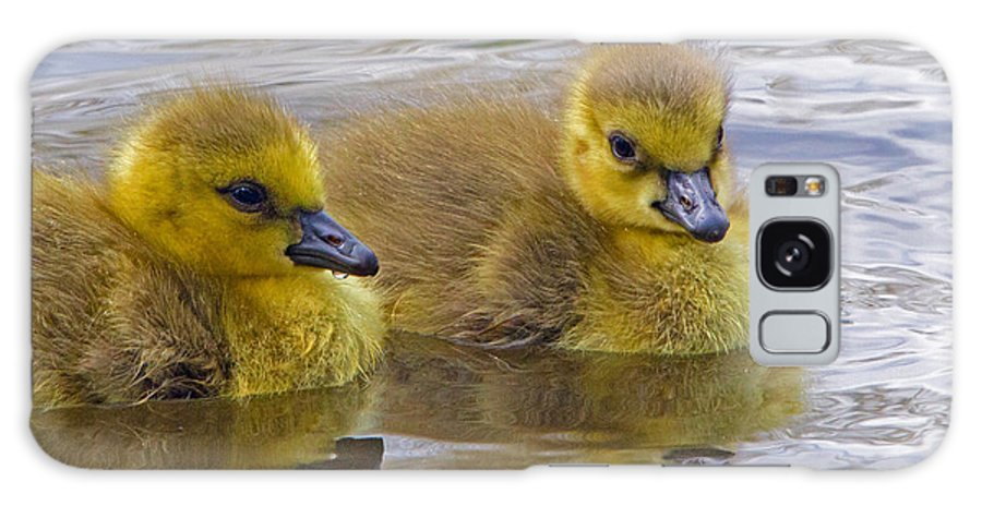 Gosling Galaxy S8 Case featuring the photograph Goslings by David Freuthal