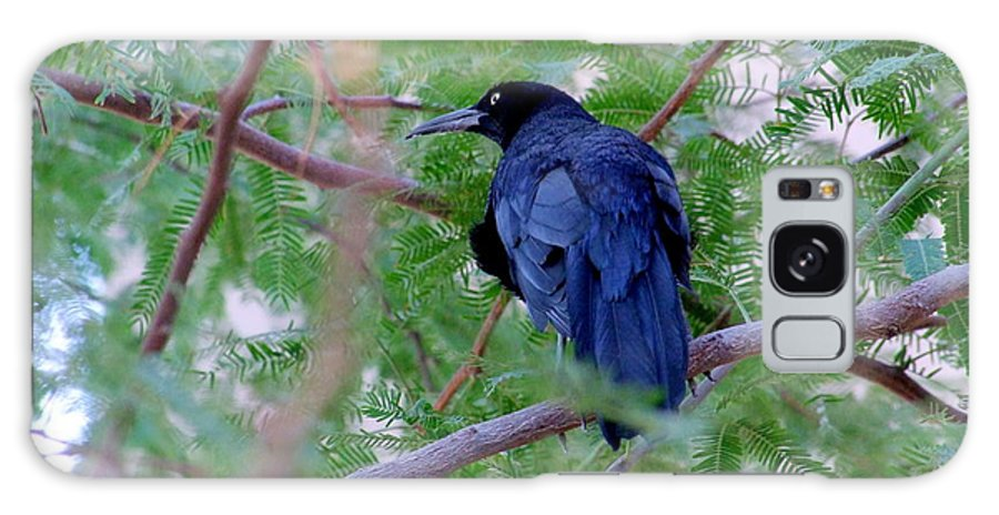 Grackles Galaxy S8 Case featuring the photograph Grackle On A Branch by Mary Deal