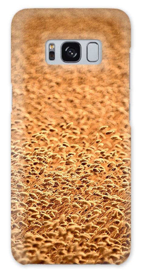Grain Galaxy S8 Case featuring the photograph grain crop ripening in Saskatchewan by Mark Duffy