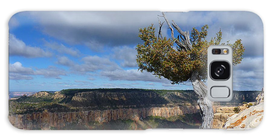 Grand Canyon Galaxy S8 Case featuring the photograph Grand Canyon Struggling Tree by Judee Stalmack