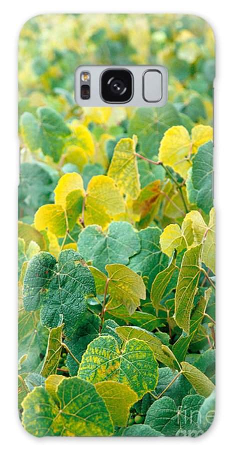 Grape Vines Galaxy S8 Case featuring the photograph Grapevines In Azores Islands by Gaspar Avila