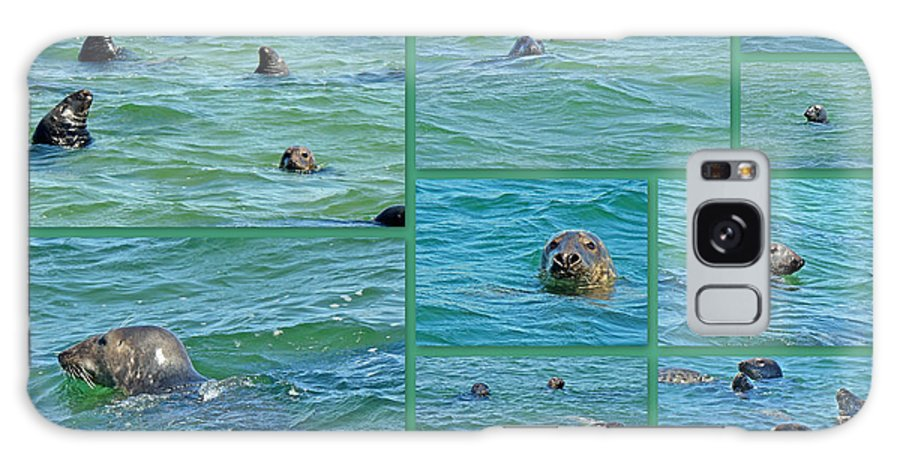 Seals Galaxy S8 Case featuring the photograph Gray Seals At Chatham - Cape Cod by Mother Nature