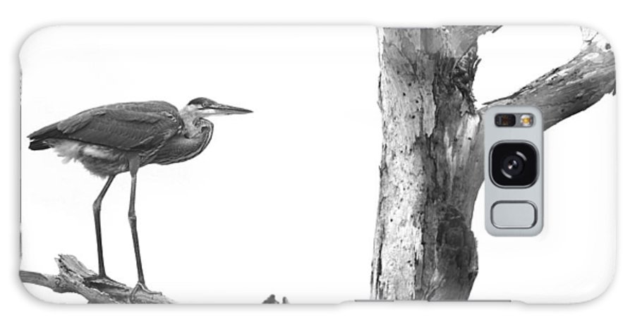 Great Blue Heron Galaxy S8 Case featuring the photograph Great Blue Heron - Dead Pine by Travis Truelove