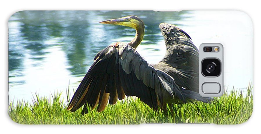 Heron Galaxy S8 Case featuring the photograph Great Blue Heron by Diana Haronis