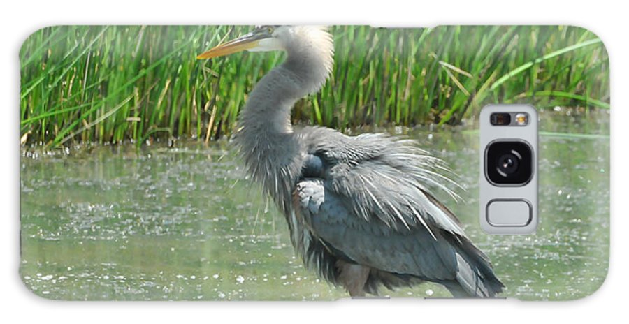 Great Blue Heron Galaxy S8 Case featuring the photograph Great Blue Heron by Paul Ward