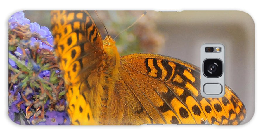 Great Spangled Fritttary Butterfly Galaxy S8 Case featuring the photograph Great Spangled Fritillary Butterfly by Paul Ward
