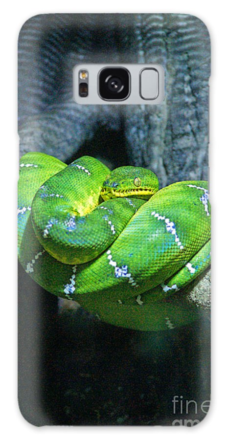 Snakes Galaxy S8 Case featuring the photograph Green Snake by Randy Harris