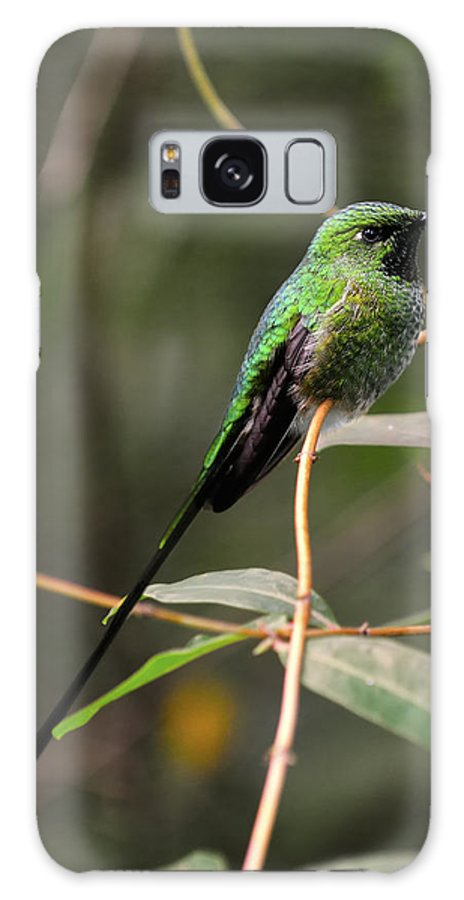 Green Galaxy S8 Case featuring the photograph Green Tailed Trainbearer by Bill Dodsworth