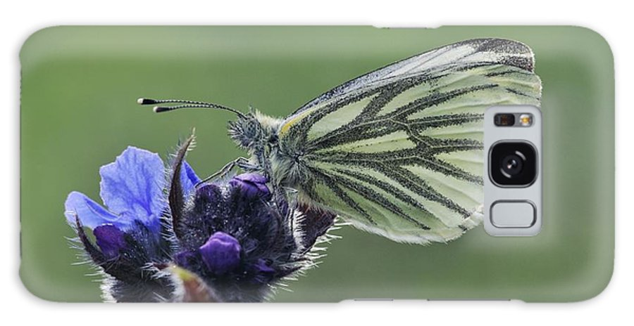 Green-veined White Butterfly Galaxy S8 Case featuring the photograph Green-veined White Butterfly by Colin Varndell