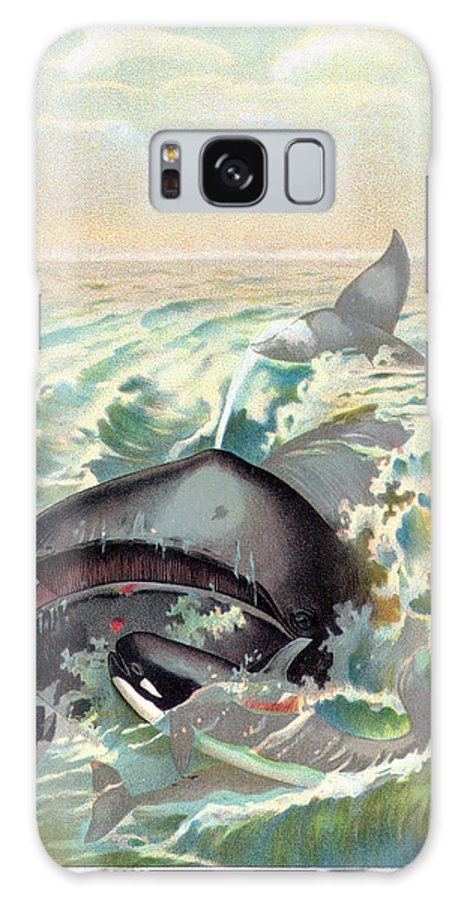 19th Century Galaxy S8 Case featuring the photograph Greenland Whale by Granger
