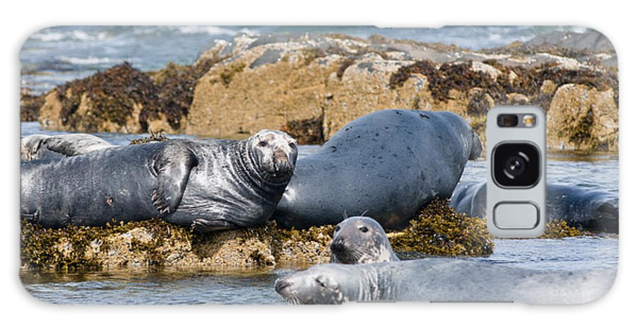 Britain Galaxy S8 Case featuring the photograph Grey Seals by Andrew Michael