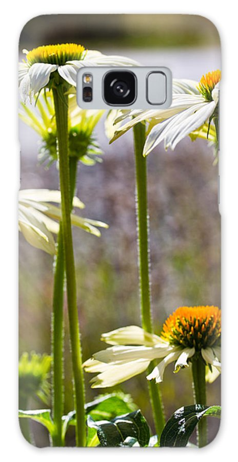 Cone Flowers Galaxy S8 Case featuring the photograph Groupings by Marie Jamieson