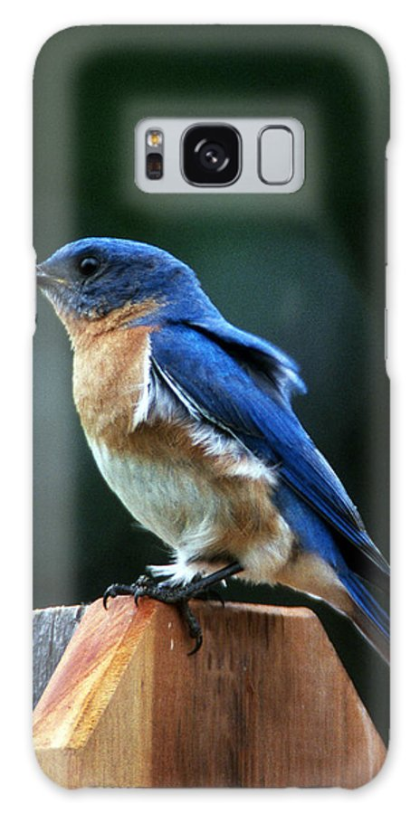 Bluebird Galaxy S8 Case featuring the photograph Guard At Work by Skip Willits