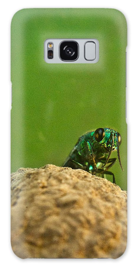 Wasp Galaxy S8 Case featuring the photograph Halicid Wasp 2 by Douglas Barnett