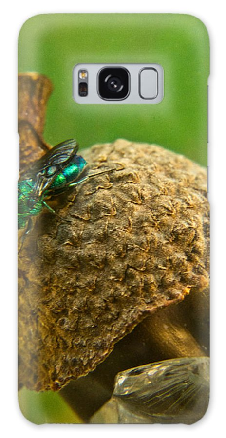 Wasp Galaxy S8 Case featuring the photograph Halicid Wasp 4 by Douglas Barnett