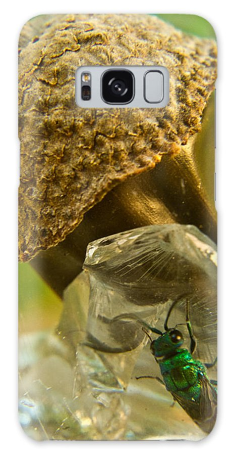 Wasp Galaxy S8 Case featuring the photograph Halicid Wasp 5 by Douglas Barnett