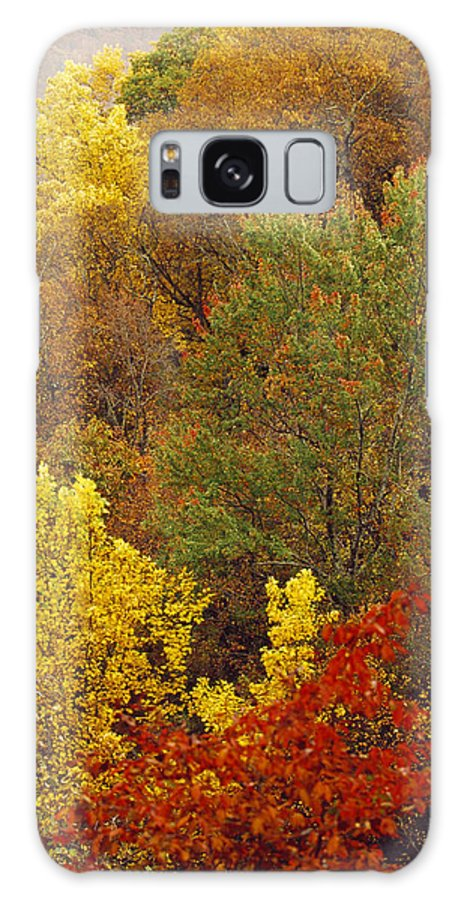 North America Galaxy S8 Case featuring the photograph Hardwood Forest With Maple And Oak by Raymond Gehman