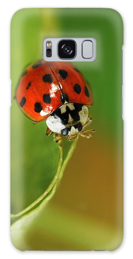 Harlequin Ladybird Galaxy S8 Case featuring the photograph Harlequin Ladybird by Colin Varndell