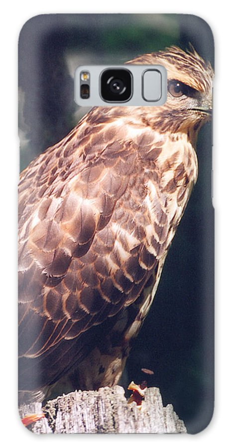 Hawk Galaxy S8 Case featuring the photograph Hawk by David Edward Burton