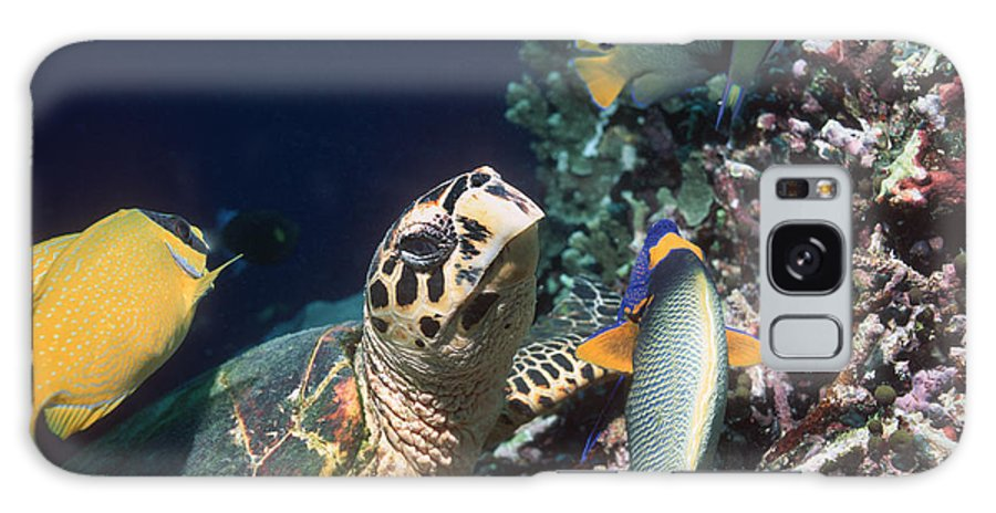 Foxface Rabbitfish Galaxy S8 Case featuring the photograph Hawksbill Turtle Feeding by Georgette Douwma