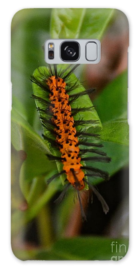 Caterpillar Galaxy S8 Case featuring the photograph Heads Or Tails by Carol Bradley