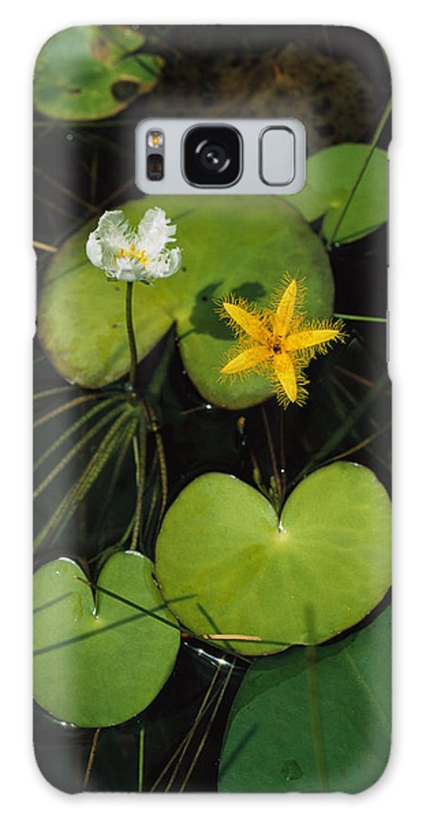Atlantic Islands Galaxy S8 Case featuring the photograph Heart-shaped Water Lily by Steve Winter