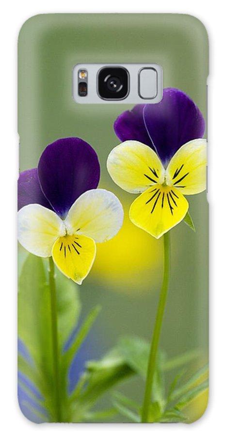 Viola Tricolor Galaxy S8 Case featuring the photograph Heartsease (viola Tricolor) by Bob Gibbons