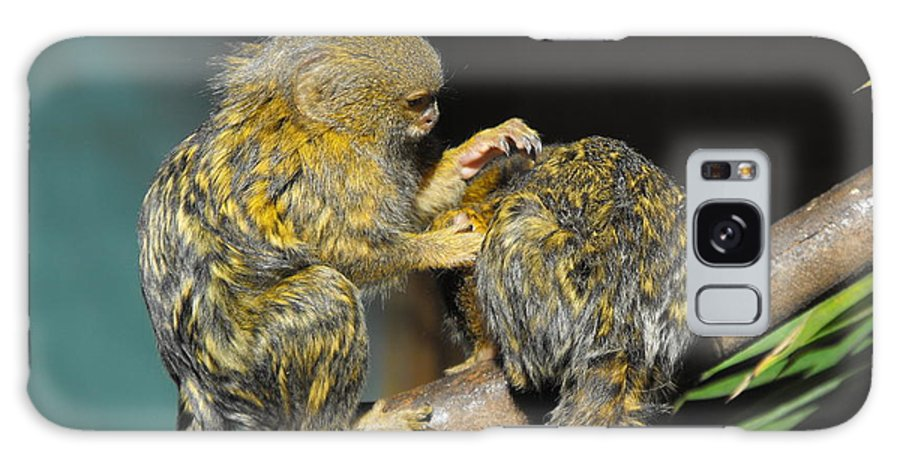 Pygmy Marmoset Galaxy S8 Case featuring the photograph Helping Hand by Marlene Challis