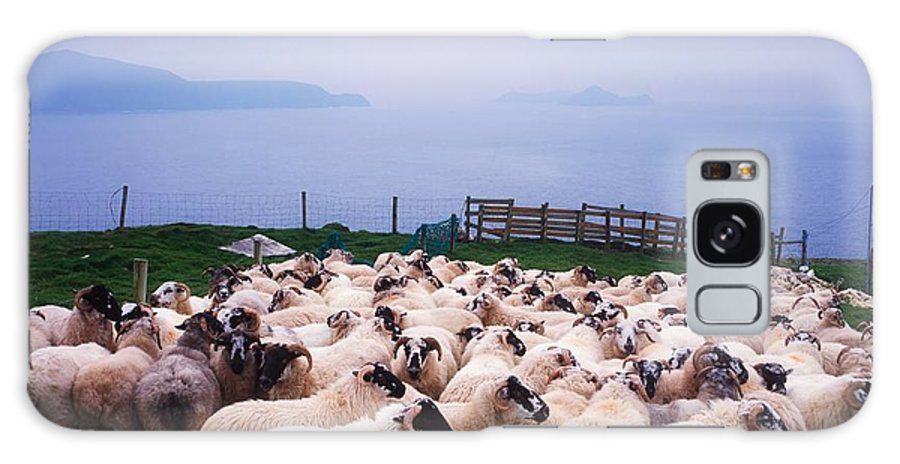 Animals Galaxy S8 Case featuring the photograph Herding Sheep, Inishtooskert, Blasket by The Irish Image Collection