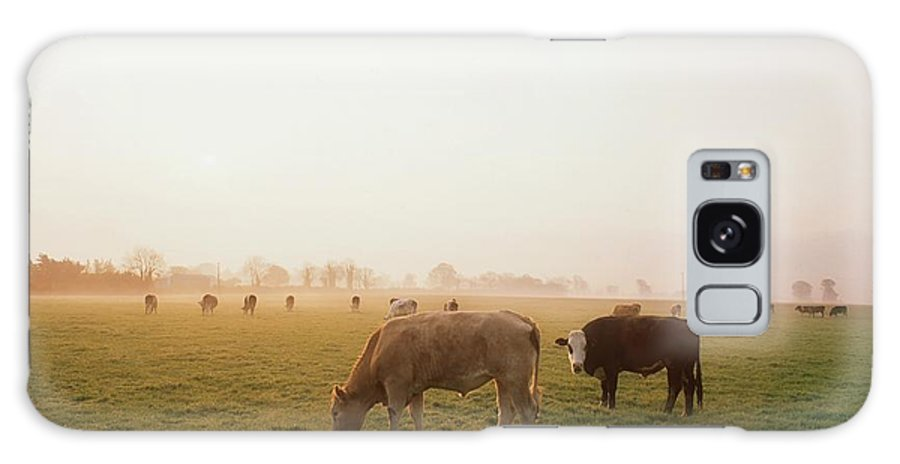Back Lit Galaxy S8 Case featuring the photograph Hereford Cattle, Ireland by The Irish Image Collection