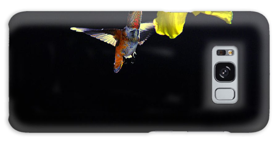 Hummer Galaxy S8 Case featuring the photograph Hibiscus Hummer On Black by Lynn Bauer