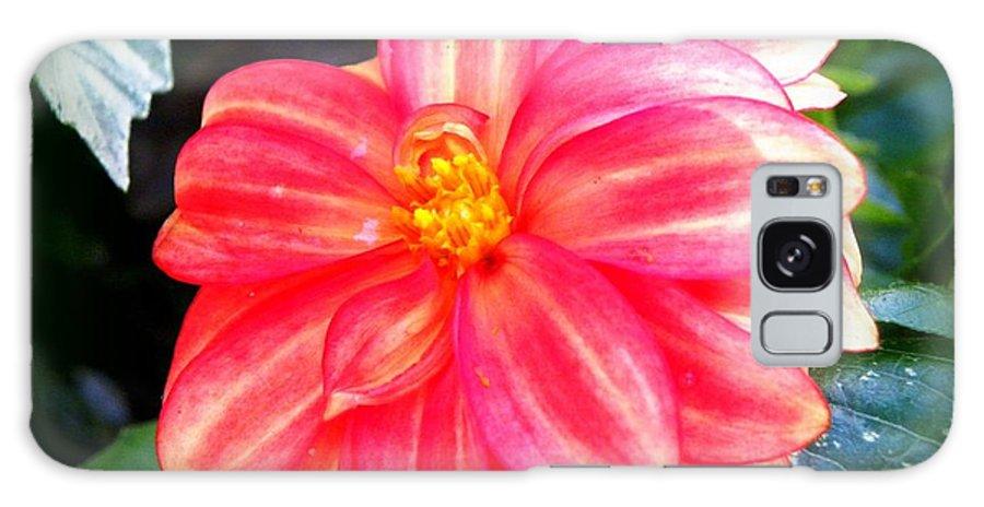 Flower Galaxy S8 Case featuring the photograph Hidden Flame by Tisha Clinkenbeard