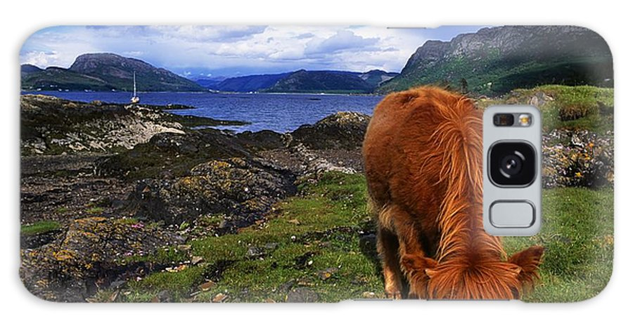 Cliff Galaxy S8 Case featuring the photograph Highland Cattle, Scotland by The Irish Image Collection