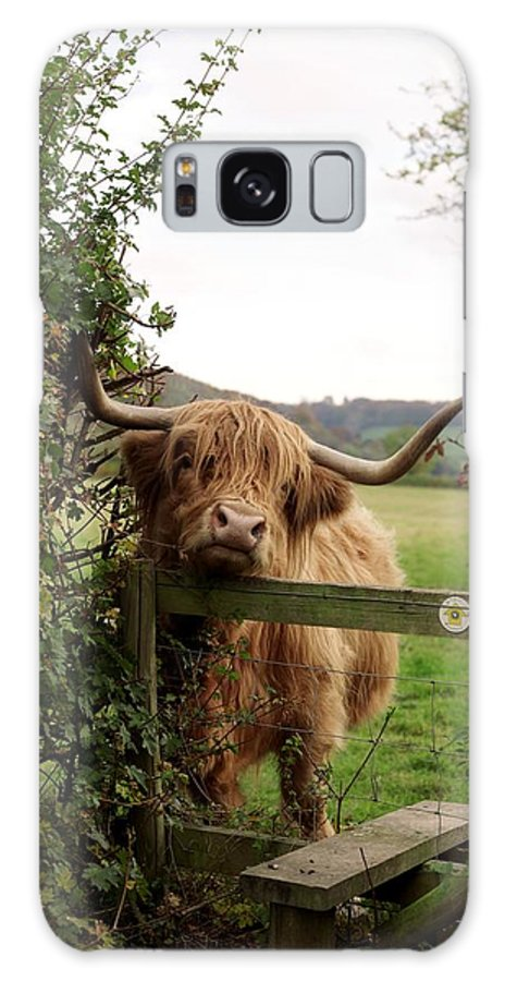 Highland Cow Galaxy S8 Case featuring the photograph Highland Cow by Tek Image
