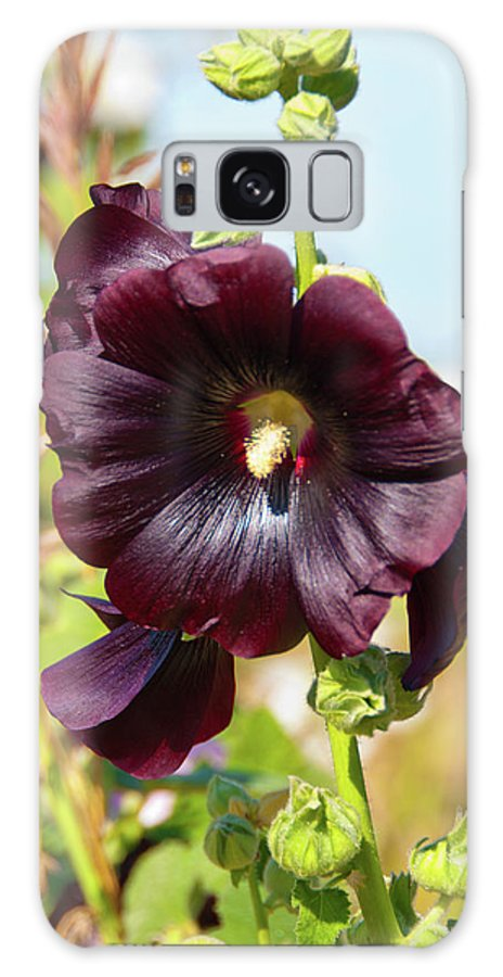 Flowers Galaxy S8 Case featuring the photograph Hollyhock 7193 by Guy Whiteley
