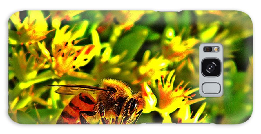 Nature Galaxy S8 Case featuring the photograph Honey Bee And Sedum by Chris Berry