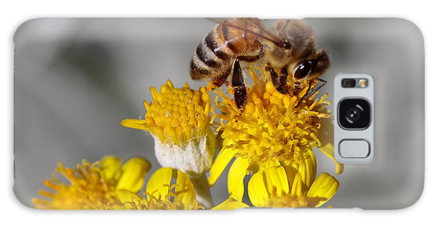 Honey Bee Galaxy S8 Case featuring the photograph Honey Bee by Mitch Shindelbower