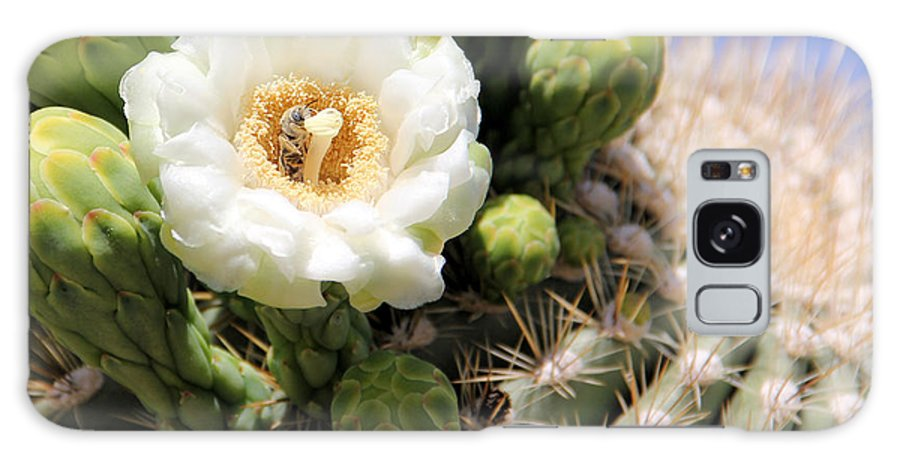 Arizona Galaxy S8 Case featuring the photograph Honey Bee's Dream by Brenda Deem