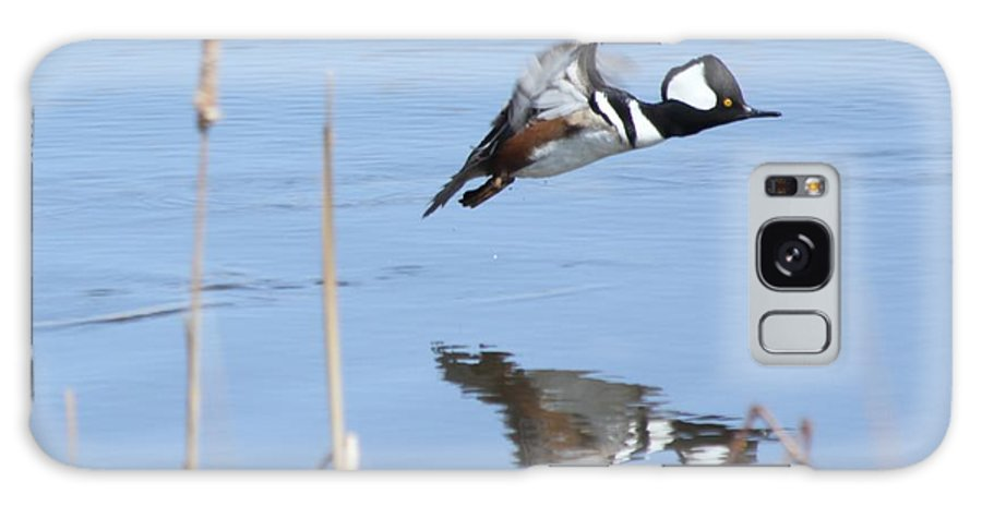 Hodded Galaxy S8 Case featuring the photograph Hooded Merganser Flying by Lori Tordsen